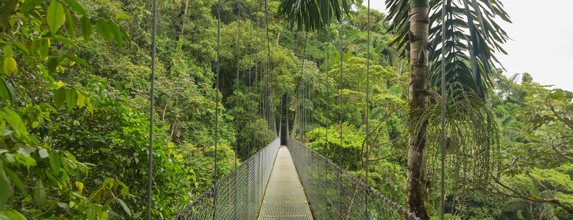 Cloud Forest Destinations In Costa Rica